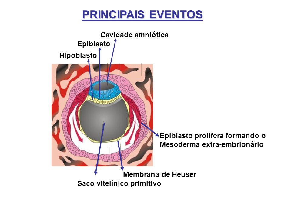 PRINCIPAIS EVENTOS Cavidade amniótica Epiblasto Hipoblasto