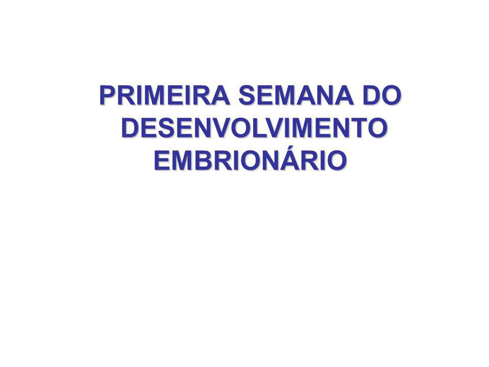 PRIMEIRA SEMANA DO DESENVOLVIMENTO EMBRIONÁRIO