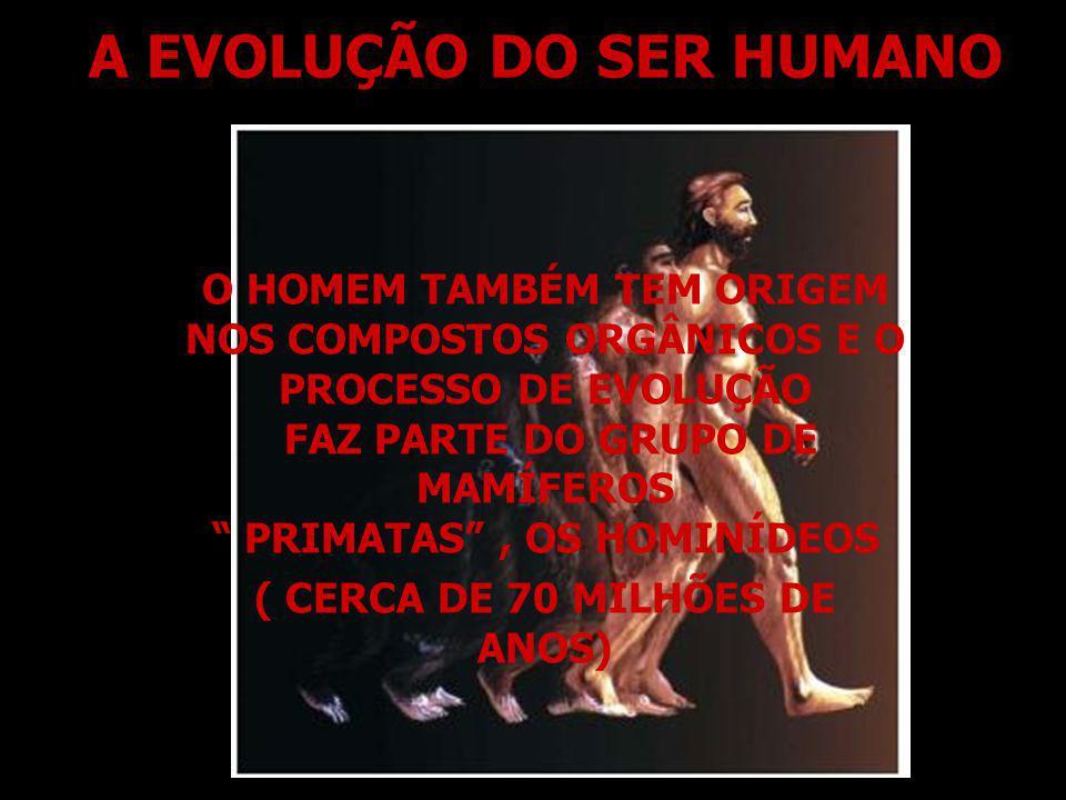 A EVOLUÇÃO DO SER HUMANO