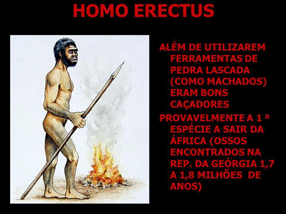 HOMO ERECTUS ALÉM DE UTILIZAREM FERRAMENTAS DE PEDRA LASCADA (COMO MACHADOS) ERAM BONS CAÇADORES.