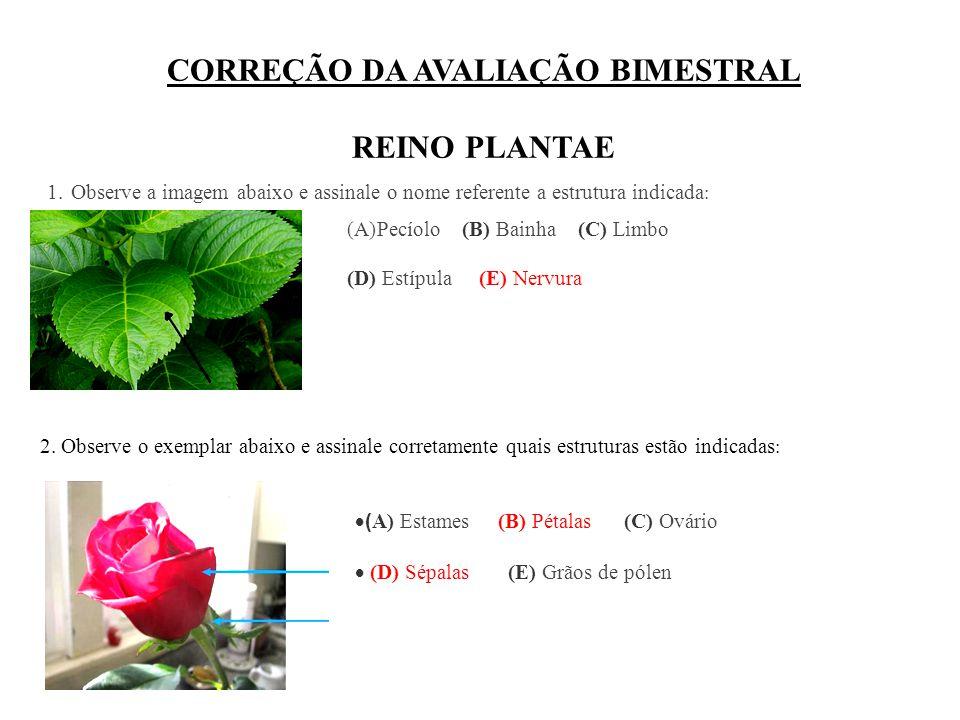CORREÇÃO DA AVALIAÇÃO BIMESTRAL REINO PLANTAE