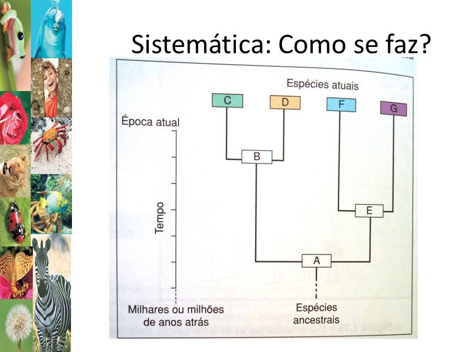 Sistemática: Como se faz
