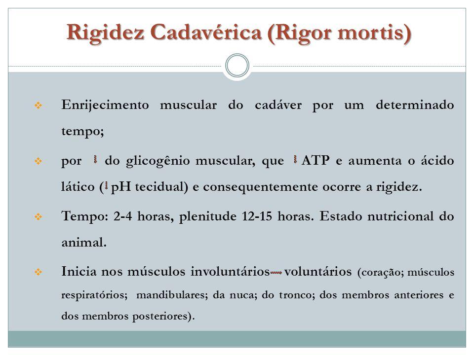 Rigidez Cadavérica (Rigor mortis)