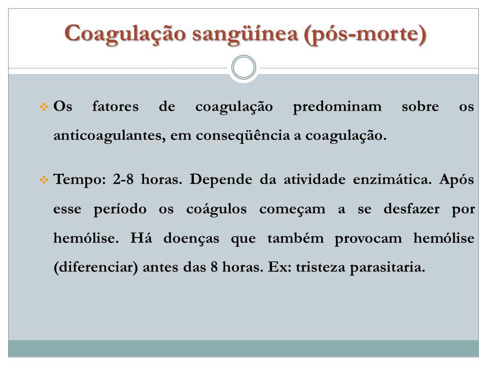 Coagulação sangüínea (pós-morte)