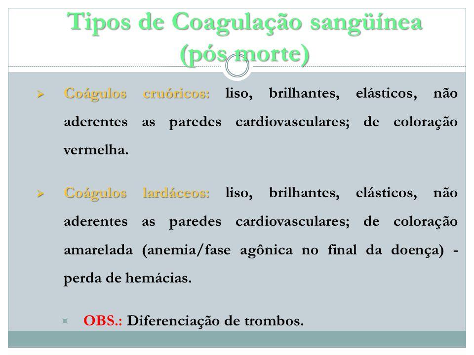 Tipos de Coagulação sangüínea (pós morte)
