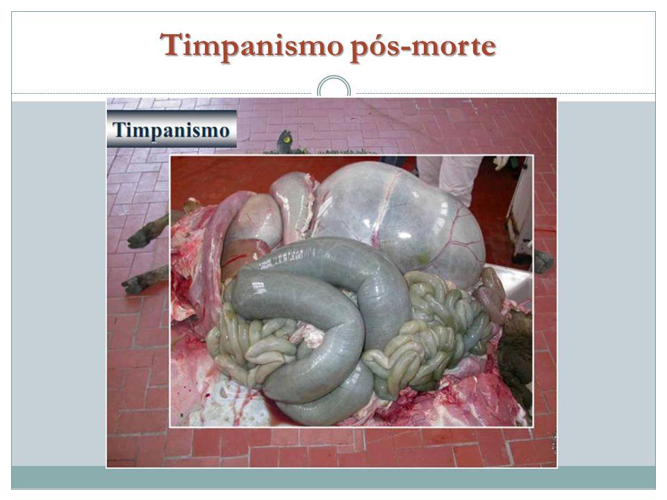 Timpanismo pós-morte