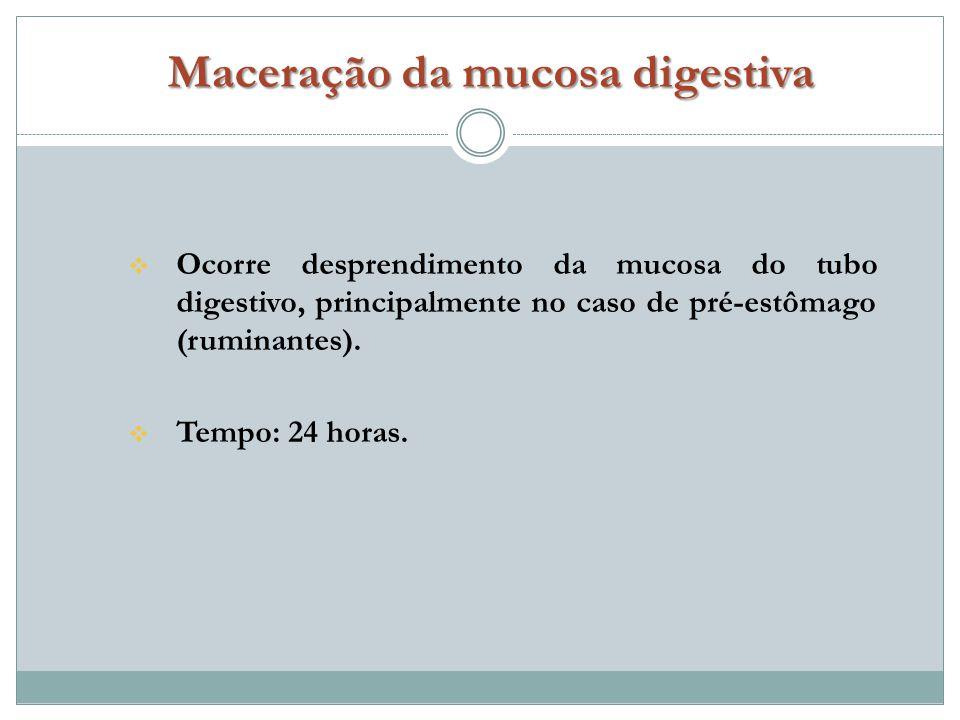 Maceração da mucosa digestiva