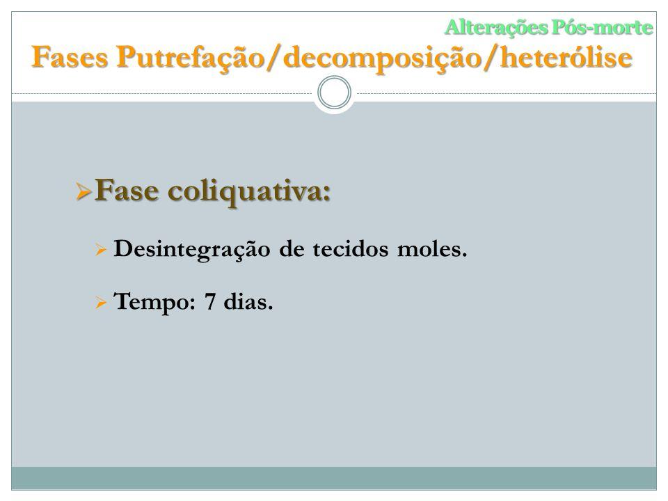 Fases Putrefação/decomposição/heterólise
