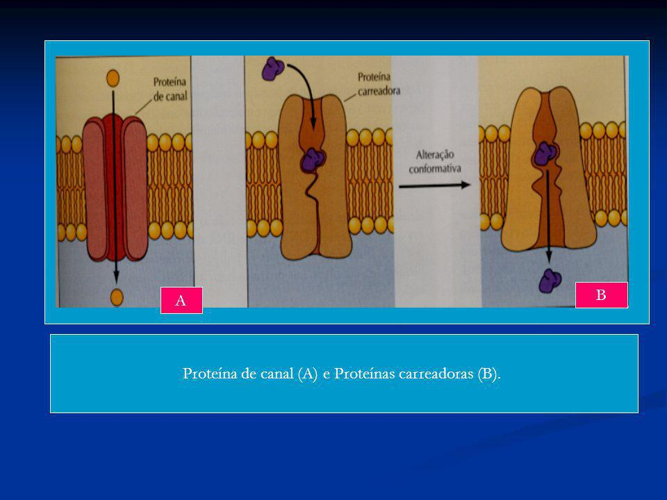 Proteína de canal (A) e Proteínas carreadoras (B).