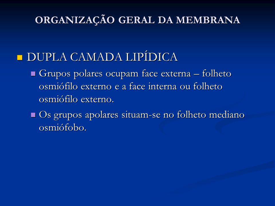 ORGANIZAÇÃO GERAL DA MEMBRANA