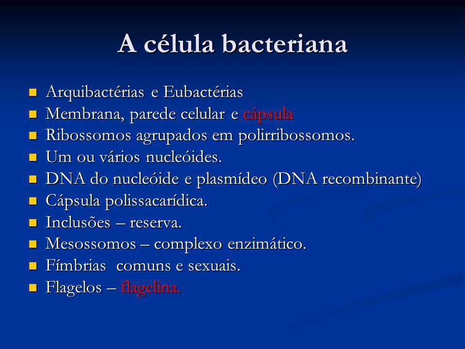 A célula bacteriana Arquibactérias e Eubactérias