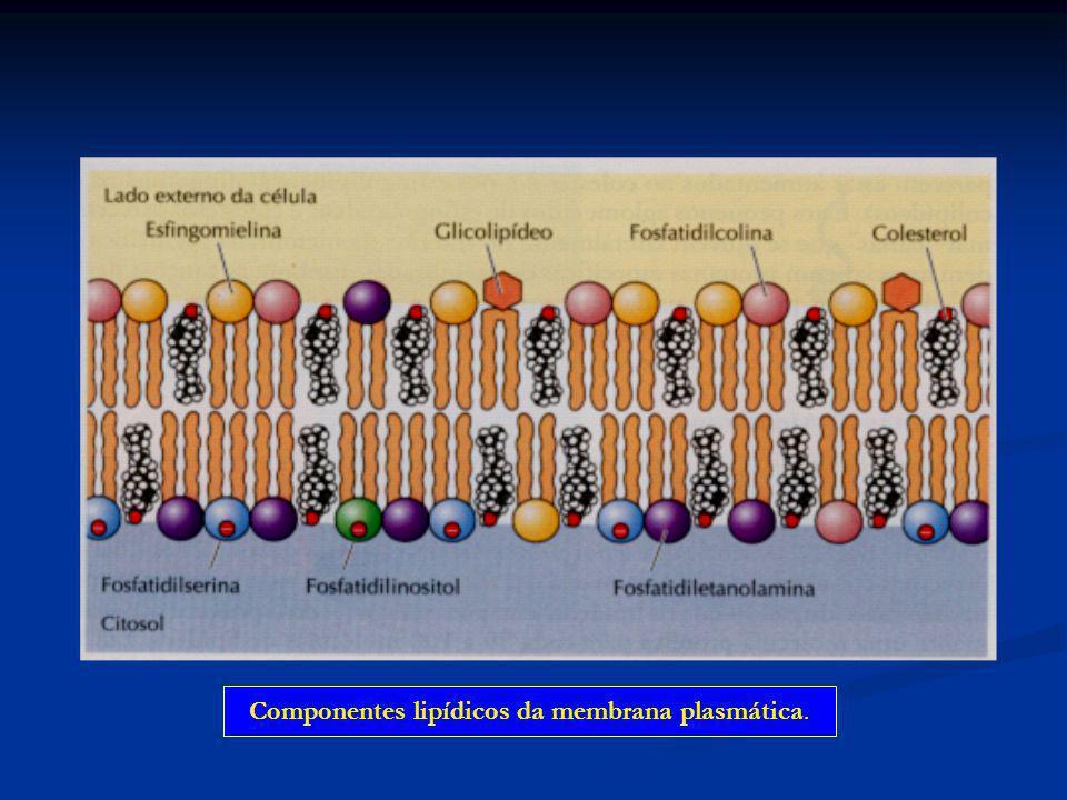 Componentes lipídicos da membrana plasmática.
