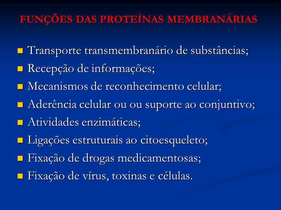 FUNÇÕES DAS PROTEÍNAS MEMBRANÁRIAS
