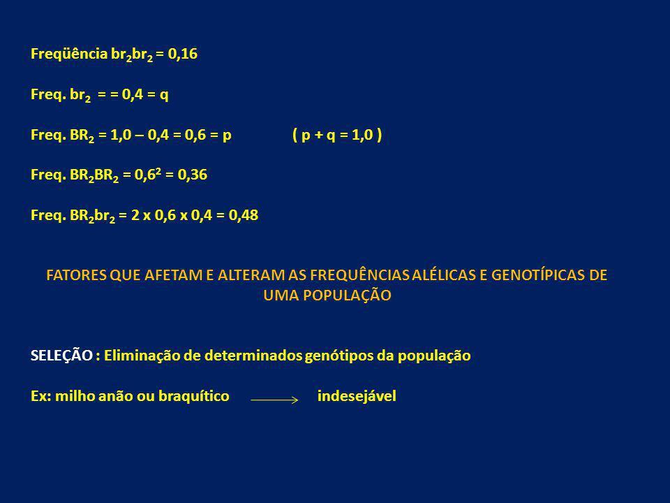 Freqüência br2br2 = 0,16 Freq. br2 = = 0,4 = q. Freq. BR2 = 1,0 – 0,4 = 0,6 = p ( p + q = 1,0 )
