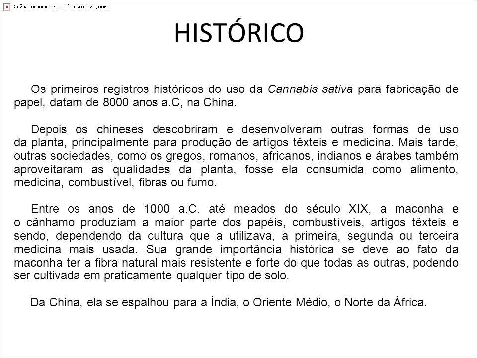 HISTÓRICO Os primeiros registros históricos do uso da Cannabis sativa para fabricação de papel, datam de 8000 anos a.C, na China.