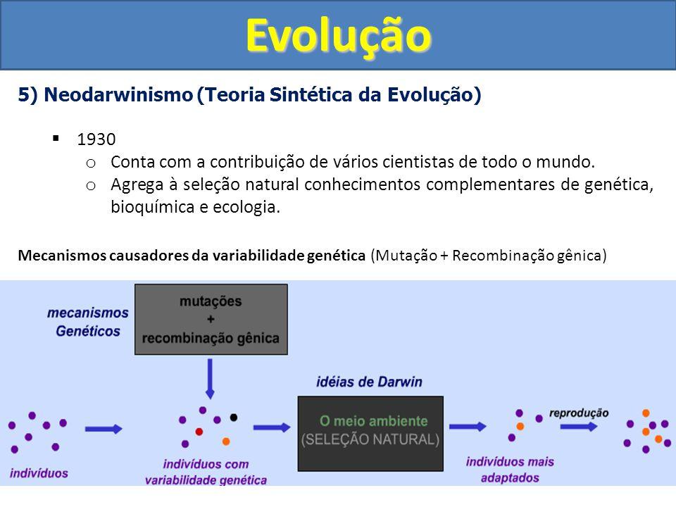 Evolução 5) Neodarwinismo (Teoria Sintética da Evolução) 1930