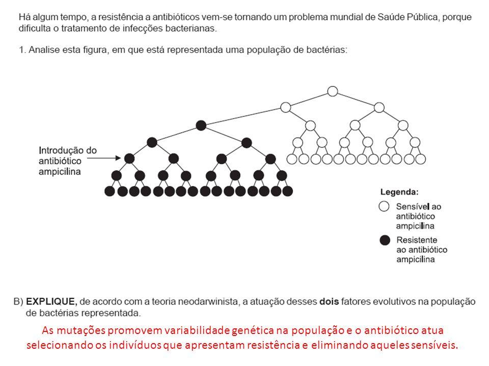 As mutações promovem variabilidade genética na população e o antibiótico atua selecionando os indivíduos que apresentam resistência e eliminando aqueles sensíveis.