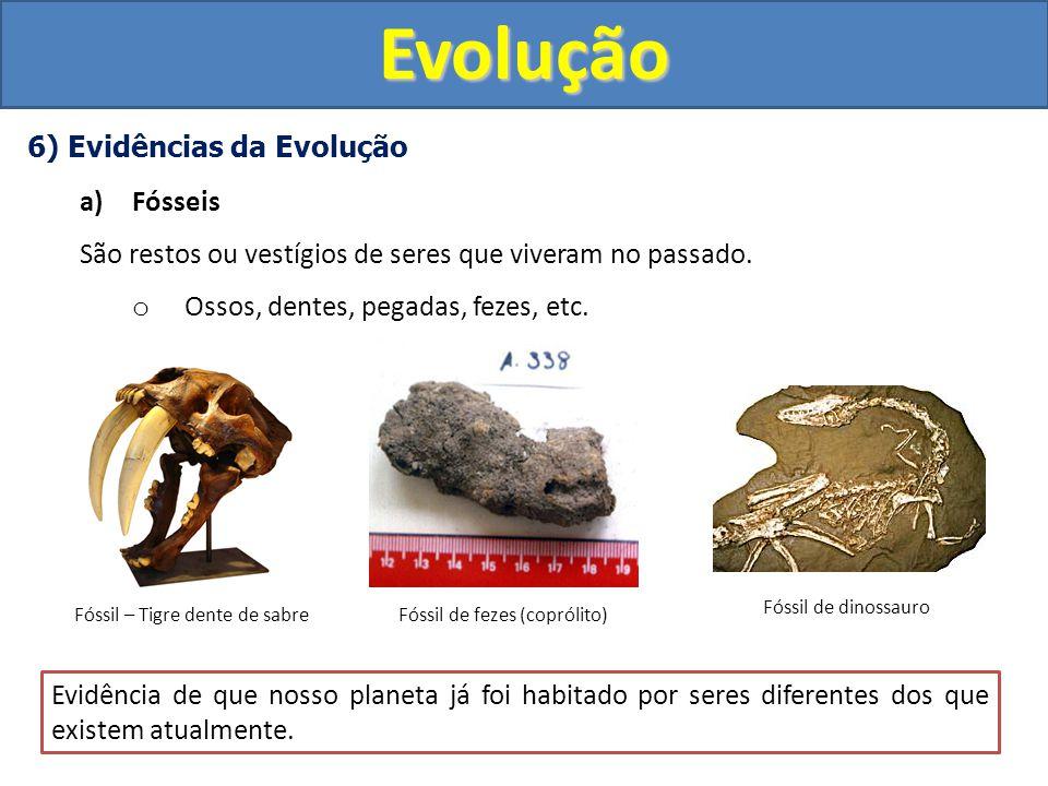 Evolução 6) Evidências da Evolução Fósseis