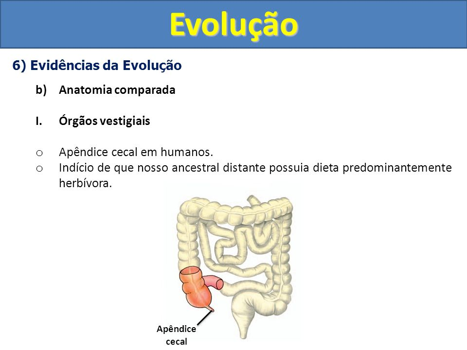 Evolução 6) Evidências da Evolução Anatomia comparada