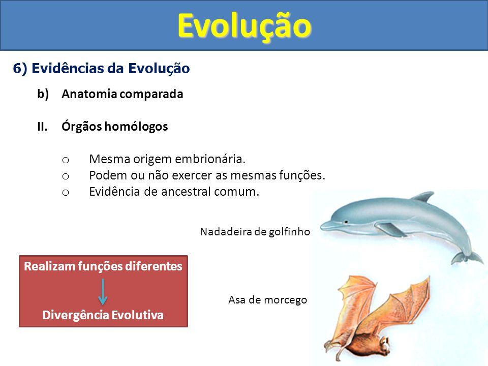 Realizam funções diferentes Divergência Evolutiva