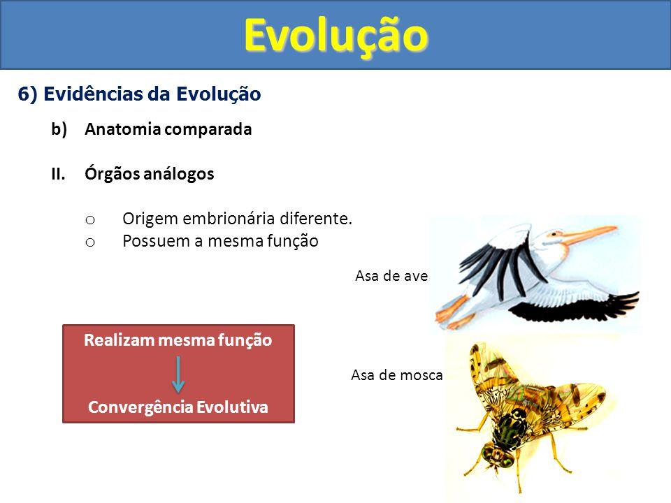 Convergência Evolutiva