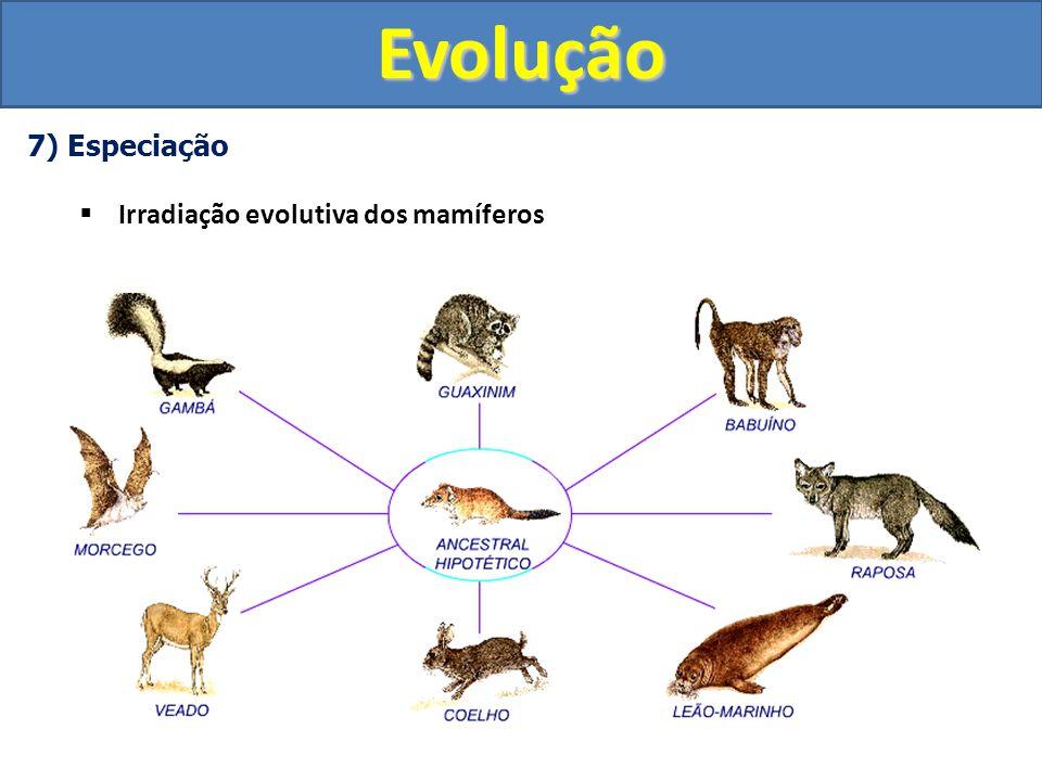 Evolução 7) Especiação Irradiação evolutiva dos mamíferos