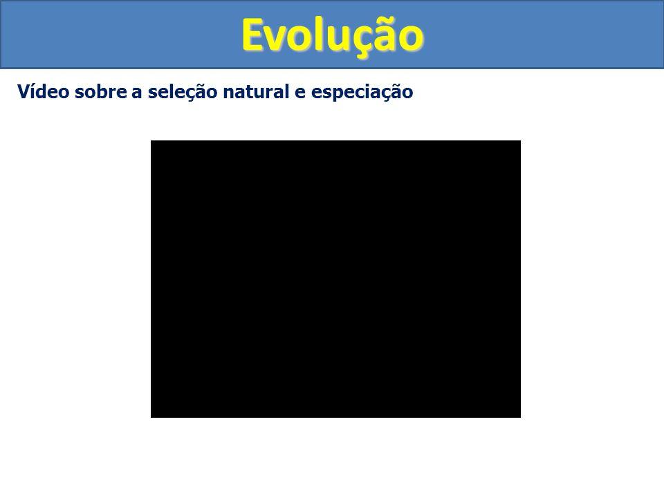 Evolução Vídeo sobre a seleção natural e especiação