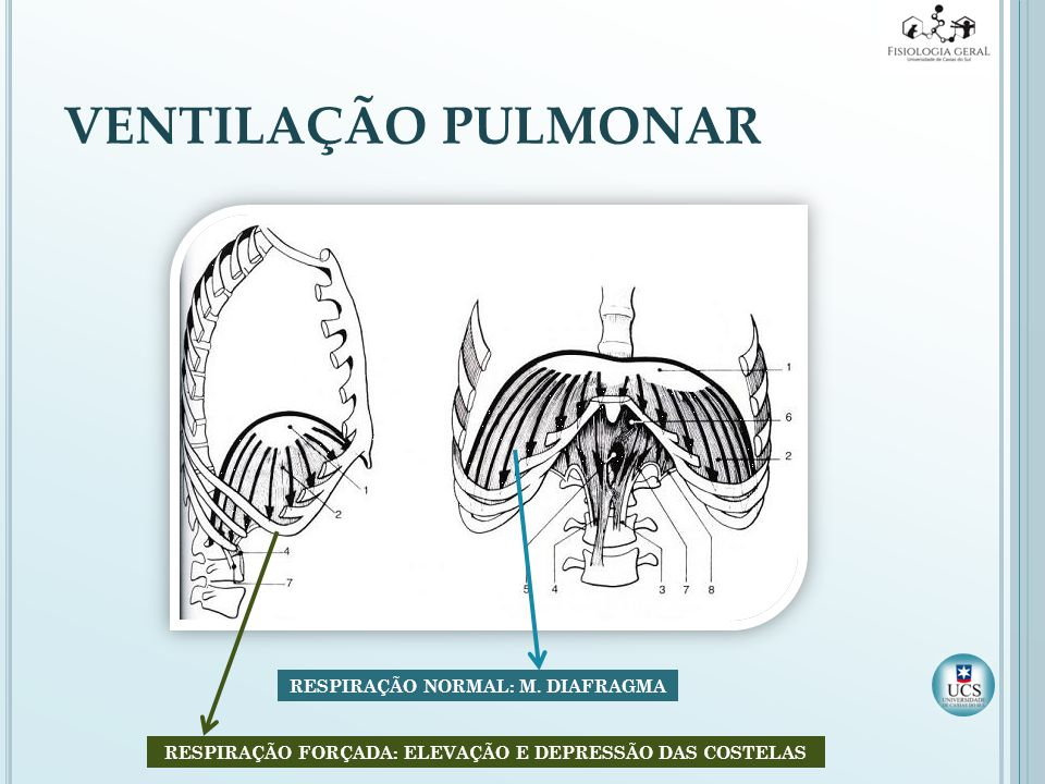 VENTILAÇÃO PULMONAR RESPIRAÇÃO NORMAL: M. DIAFRAGMA