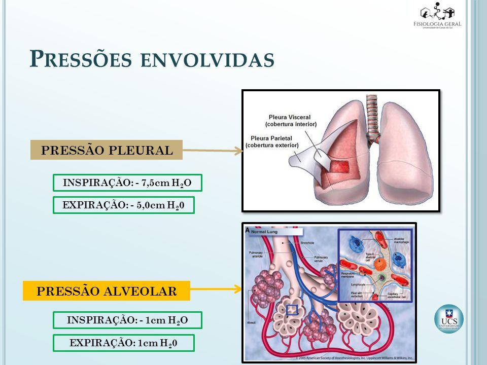 Pressões envolvidas PRESSÃO PLEURAL PRESSÃO ALVEOLAR