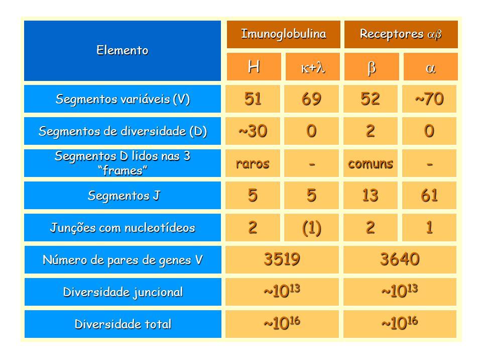 Elemento Imunoglobulina. Receptores ab. H. k+l. b. a. Segmentos variáveis (V) 51. 69. 52. ~70.