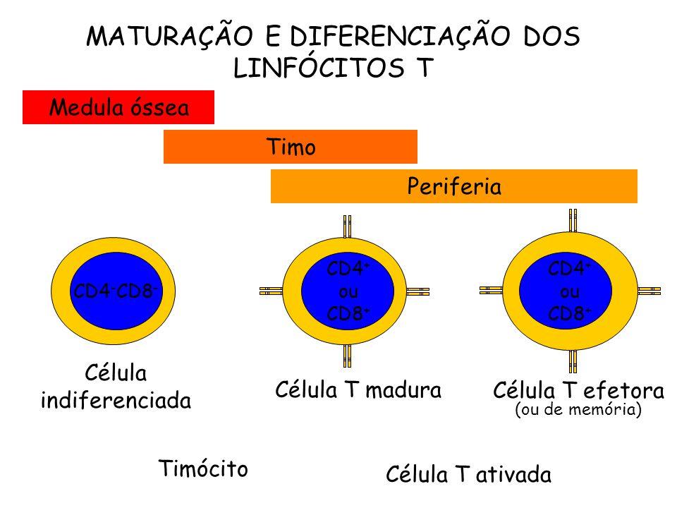 MATURAÇÃO E DIFERENCIAÇÃO DOS LINFÓCITOS T
