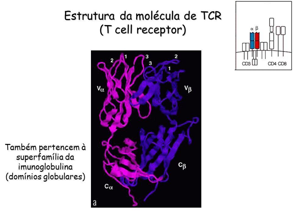 Estrutura da molécula de TCR (T cell receptor)