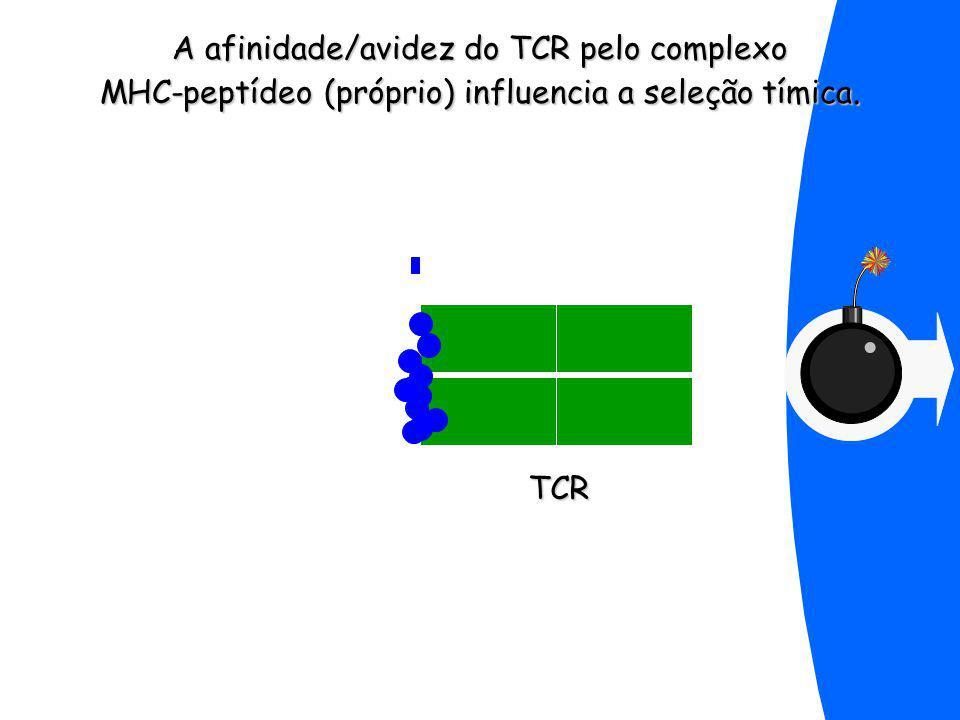 A afinidade/avidez do TCR pelo complexo MHC-peptídeo (próprio) influencia a seleção tímica.