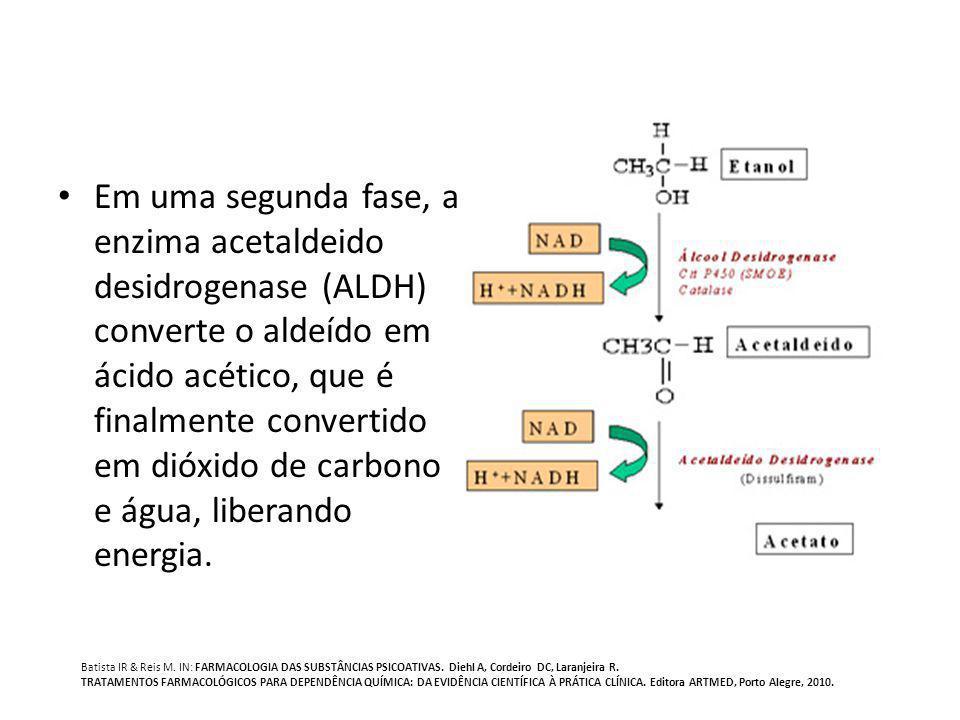 Em uma segunda fase, a enzima acetaldeido desidrogenase (ALDH) converte o aldeído em ácido acético, que é finalmente convertido em dióxido de carbono e água, liberando energia.