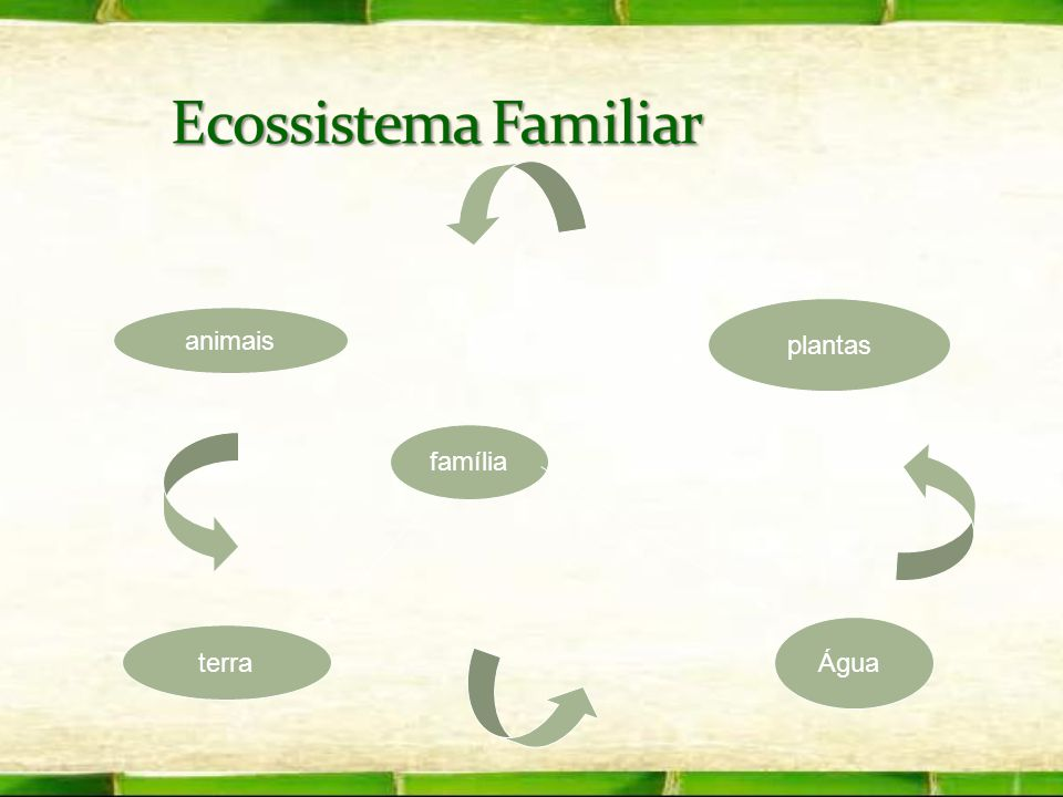 Ecossistema Familiar plantas animais família Água terra