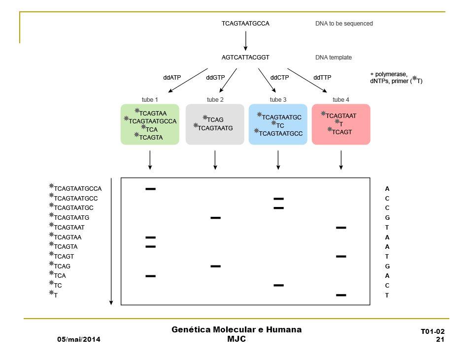 Genética Molecular e Humana MJC