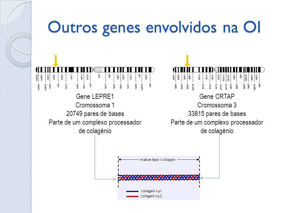 Outros genes envolvidos na OI