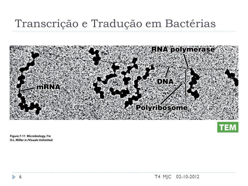 Transcrição e Tradução em Bactérias