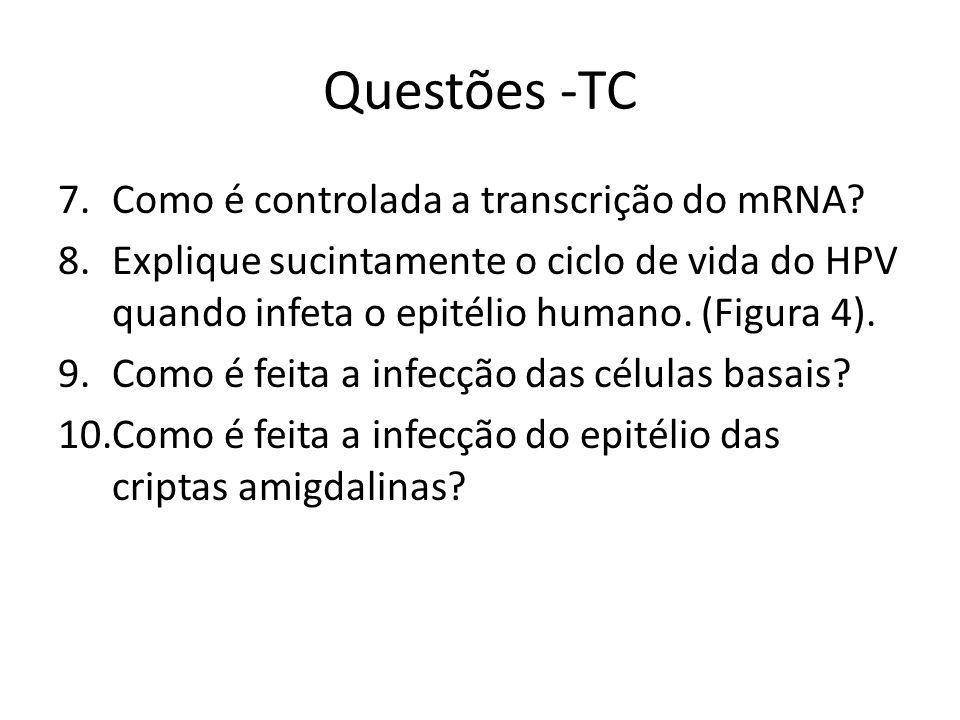 Questões -TC Como é controlada a transcrição do mRNA