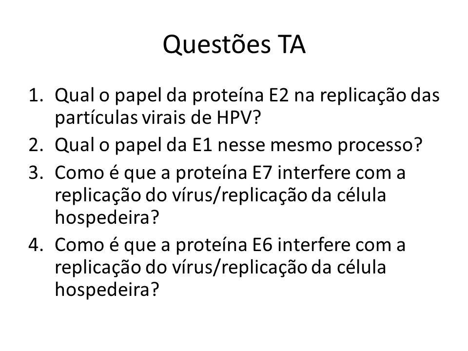 Questões TA Qual o papel da proteína E2 na replicação das partículas virais de HPV Qual o papel da E1 nesse mesmo processo