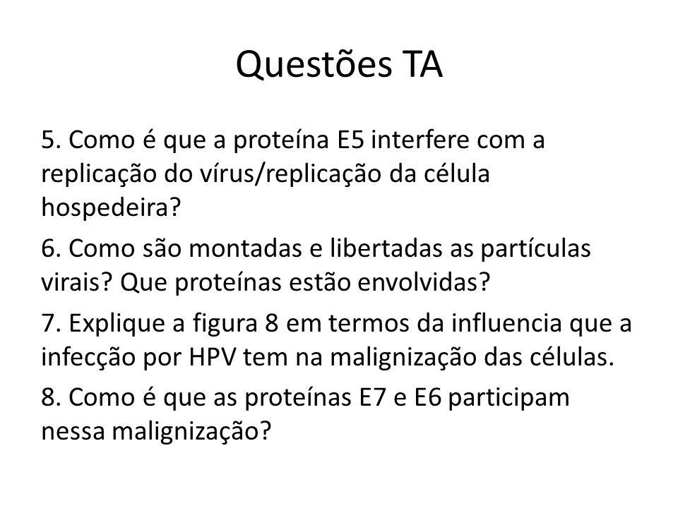 Questões TA 5. Como é que a proteína E5 interfere com a replicação do vírus/replicação da célula hospedeira