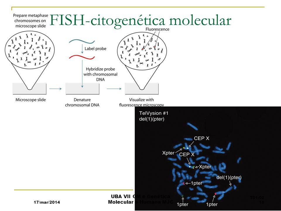 FISH-citogenética molecular
