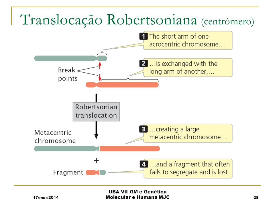 Translocação Robertsoniana (centrómero)