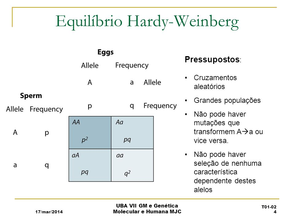 Equilíbrio Hardy-Weinberg