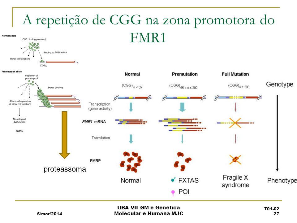A repetição de CGG na zona promotora do FMR1