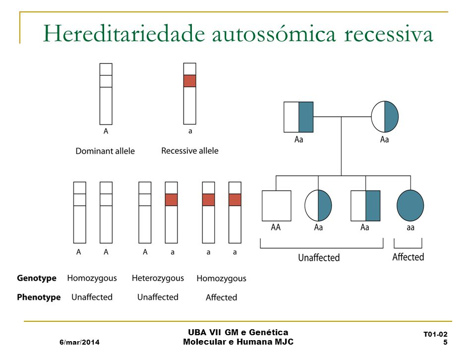 Hereditariedade autossómica recessiva
