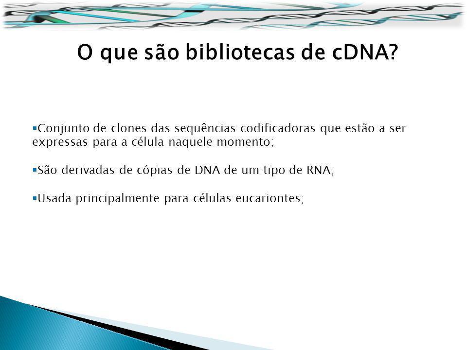 O que são bibliotecas de cDNA