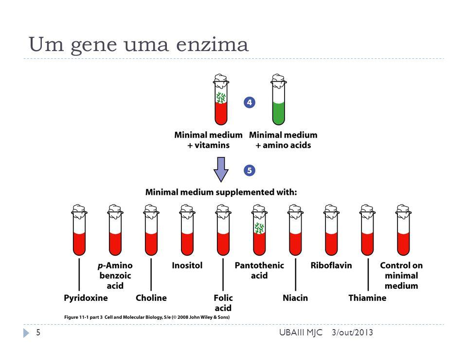 Um gene uma enzima UBAIII MJC 3/out/2013