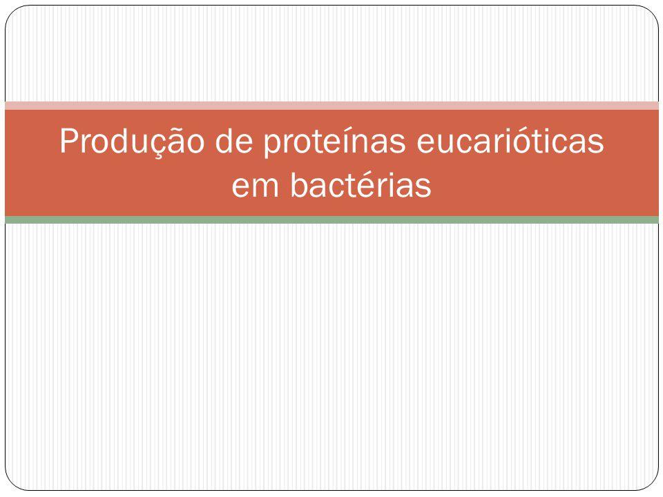 Produção de proteínas eucarióticas em bactérias