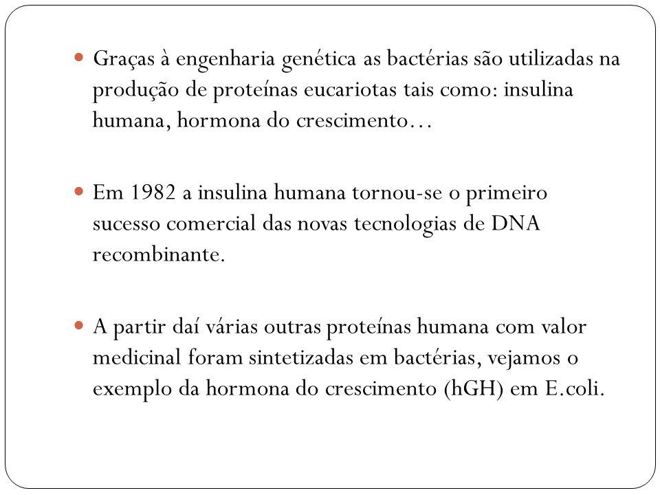 Graças à engenharia genética as bactérias são utilizadas na produção de proteínas eucariotas tais como: insulina humana, hormona do crescimento…